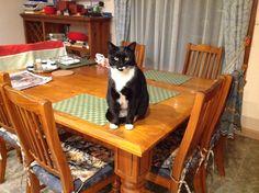 Pets, Animals, Animals And Pets, Animales, Animaux, Animal, Animais