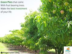 #Green #Plots that come with fruit bearing #trees. Make the best investment of your life. Contact Pragati Green Living today.