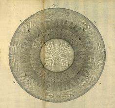 1680 book The Anatomy of Plants, the English botanist Nehemiah Grew revealed for the first time the inner structure and function of plants in all their splendorous intricacy.