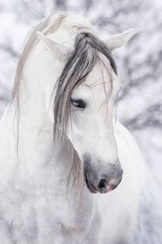White horse on white snow, lovely horse photography.