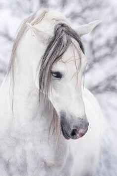 White horse on white snow, lovely horse photography.