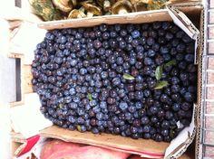 ENDRINAS ( para hacer PACHARAN ) bebida típica de Navarra Food, Happy, Fruit, Foods, Meal, Essen, Hoods, Meals, Eten