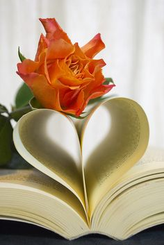 Love is a Rose I Love Heart, My Love, My Heart, Leonardo Boff, Book Flowers, Beautiful Flowers, Beautiful Hearts, Book Art, Photos