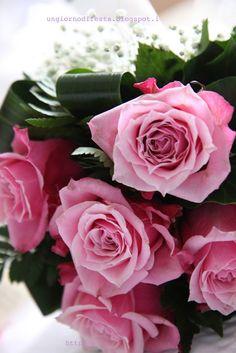 rose fuxia