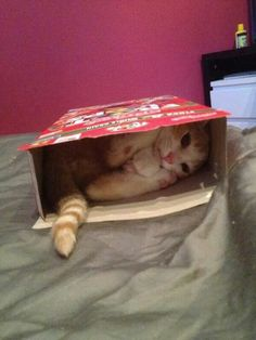 =^..^= Kitty in a BOX