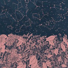 stars, constellations & flowers at night • »you had to be there« illustration by Hayley Powers Thornton-Kennedy