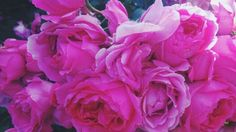 #roses #flowers #pink