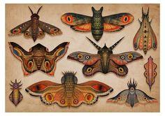 Collection | Vladimir Stankovic