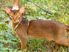 O'mee Cat | Pawshake Singapore