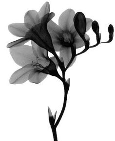 freesia - means the ideal way to congratulate someone who kept their cool under difficult circumstances.