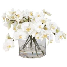 White Orchids in Glass Cylinder ,  , large