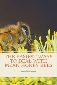 If you have honey bees, you likely know how difficult it can be to work with a hive that keeps stinging you. Here are some common reasons behind your hive's recent aggression, as well as tips to stop the bee aggression in its path. #beekeeping #honeybees Honey Bee Sting, Honey Bee Pollen, Honey Bees, Hydroponic Gardening, Container Gardening, Gardening Tips, Vegetable Gardening, Urban Gardening, Flower Gardening