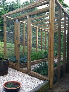 My enclosed garden!