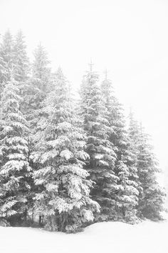Winter Print Snowy Forest Art Winter Forest Living Room Art Christmas Prints Winter Landscape Snow Covered Trees Black And White Wall Art Winter Forest, Snowy Forest, Winter Magic, Forest Art, Snowy Trees, Snowy Woods, Winter Mountain, Free Winter Wallpaper, Winter Iphone Wallpaper