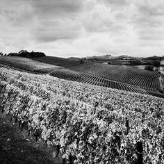 Clouds, Rolling Hills and Great Foliage. Vineyard.