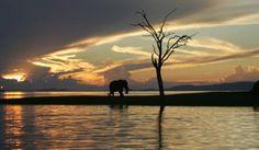 Elephants at sunset on Matusadona shoreline, Lake Kariba - from The Middle Zambezi - http://zambezitraveller.com/kariba-middle-zambezi/world-heritage/middle-zambezi (Photo Steve Edwards)