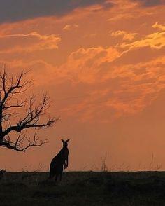 Sunset in Canberra - Australia
