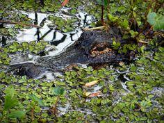 jean lafitte national historical park and preserve - Google-søk