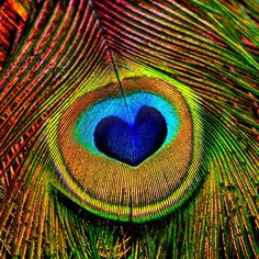 Peacock Feathers Eye Of Love Photograph #EasyNip