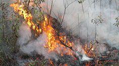 Prescribed fire in November 2012 at The Crosby Arboretum
