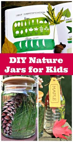 Create nature jars using leaves and tree seeds - kids can learn about leaf identification and match seeds and leaves to trees! Earth Day Activities, Summer Activities For Kids, Autumn Activities, Science Activities, Outdoor Activities, Play Based Learning, Fun Learning, Teaching Kids, Leaf Identification