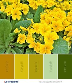 Color Palette Ideas from Flower Yellow Plant Image