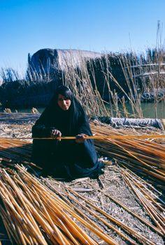 Marsh Arab woman picking reeds for house mudhif, Iraq