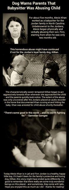 M. +++++HERO+++++ Dog Warns Parents Babysitter Was Abusing Child - www.meme-lol.com