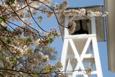 UGA Chapel Bell. Best tradition in the SEC!