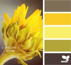 Yellow Blooms.  Color Board