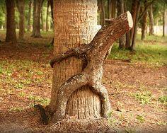 Erotic nature - sexy tree