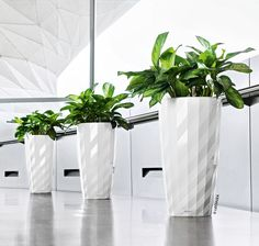 Striking white lechuza diamante planters. Available at newprocontainers.com.