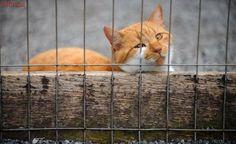 Abrigo Animal de Joinville corre risco de fechar as portas por falta de alvará de localização