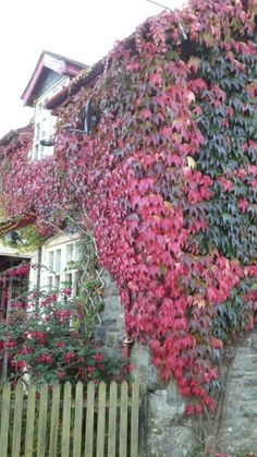 Bliss Cottage in autumn bloom. For sale in Wales. UK