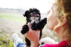 Humane Society - Poodle
