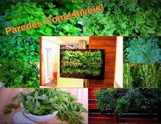 Isso mesmo! Pequenos jardins verticais podem produzir legumes temperos chás e ervas e deixar sua casa sempre com o verde ao seu alcance. #jardins #jardinsverticais #paredesverdes #sustentabilidade #sustentavel #hortaemcasa #hortasurbanas #wallgreen #portoalegre #riograndedosul #temperos # ambientalleengenharia by ambientalle_ecodesigns http://ift.tt/1TzKPGW