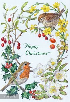 Robin and Wren with Winter Jasmine, Holly etc
