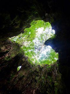 Heart Shape at Wilson's Stump in Yakushima , Kagoshima ,Japan