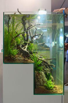 Ideas and Tips for a Better Aquarium Tank Home Aquarium, Nature Aquarium, Aquarium Design, Aquarium Fish Tank, Planted Aquarium, Aquarium Garden, Nano Aquarium, Fish Tanks, Terrariums