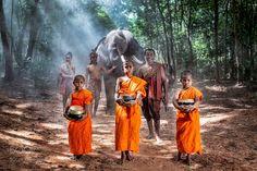 Popular #Photo #Journalism on #500px : Novice munk went on a pilgrimage front elephants by Pitakchatr #photography http://ift.tt/2f2zPVZ #photography