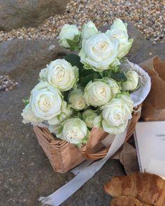 Plant Aesthetic, Flower Aesthetic, Pretty Flowers, Fresh Flowers, My Flower, Flower Power, White Roses, White Flowers, Planting Succulents