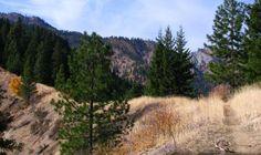 Trail: Freund Creek, Leavenworth, Washington. Photo: AK_Dan.