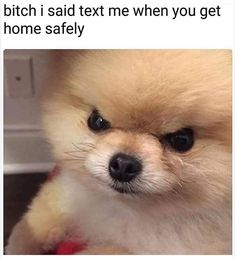 The Most Hilarious Animal Memes On The Web - 24