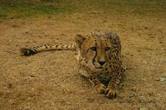 Kruger National Park, Lonely Planet, Big Cats, North West, Travel Guide, South Africa, Wildlife, Travel Guide Books