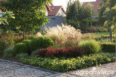 Madżenie ogrodnika... Kiedyś tu.... - strona 1535 - Forum ogrodnicze - Ogrodowisko