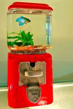♥ Aquarium Ideas ♥  Gum Ball Machine Fish Tank!  Remove the top of the gum ball machine and twist off the glass globe. Remove the mechanical parts inside the machine. Apply plumber's caulk around the bottom of a round glass bowl that holds at least 1-gallon of water Press the caulk against the metal base. Fill the bowl with water & filler then add your fish!