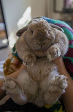 My chubby bunny