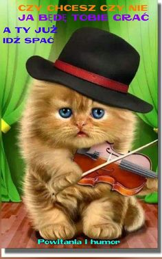 Humor Videos, Humor Grafico, Artist Names, Colorful Backgrounds, Jigsaw Puzzles, Kitten, About Me Blog, Challenges, Cats