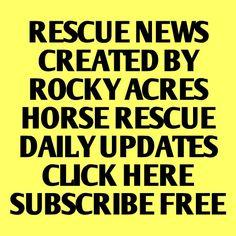 http://paper.li/RockyAcresHorse/1365951072