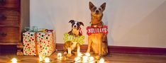 Use wood letters and dog bone shapes to create whimsical photo props for this year's Christmas card.